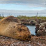 Nossa experiência em Galápagos – Ilha Isabela